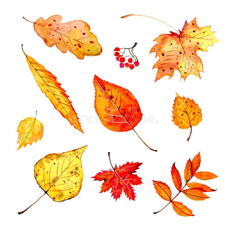 Ensemble de différentes feuilles d'automne colorées Illustration stylisée de croquis d'aquarelle tirée par la main illustration libre de droits