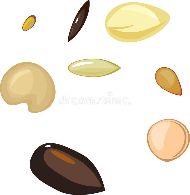 Ensemble de différentes graines d'usine illustration de vecteur