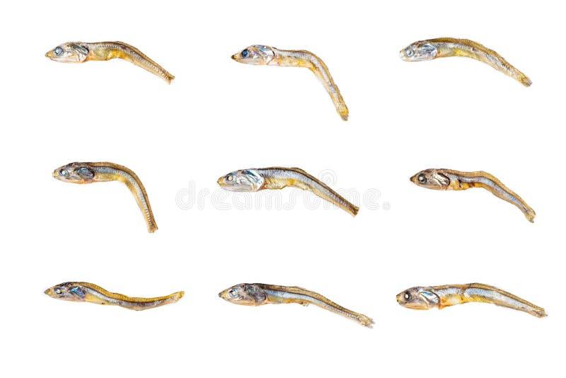 Ensemble de différentes sardines japonaises sèches sur le fond blanc Fin vers le haut photo libre de droits