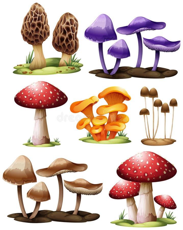Ensemble de différents champignons illustration de vecteur