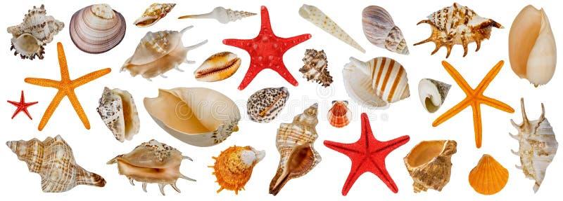 Ensemble de différents coquillages Collection Starfish Isolé sur un fond blanc images stock