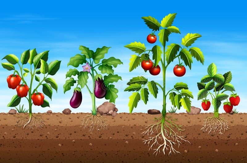 Ensemble de différents légume et plantes fruitières illustration stock