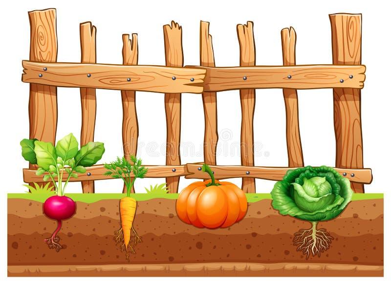 Ensemble de différents légumes illustration libre de droits