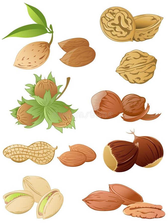 Ensemble de diverses noix illustration de vecteur