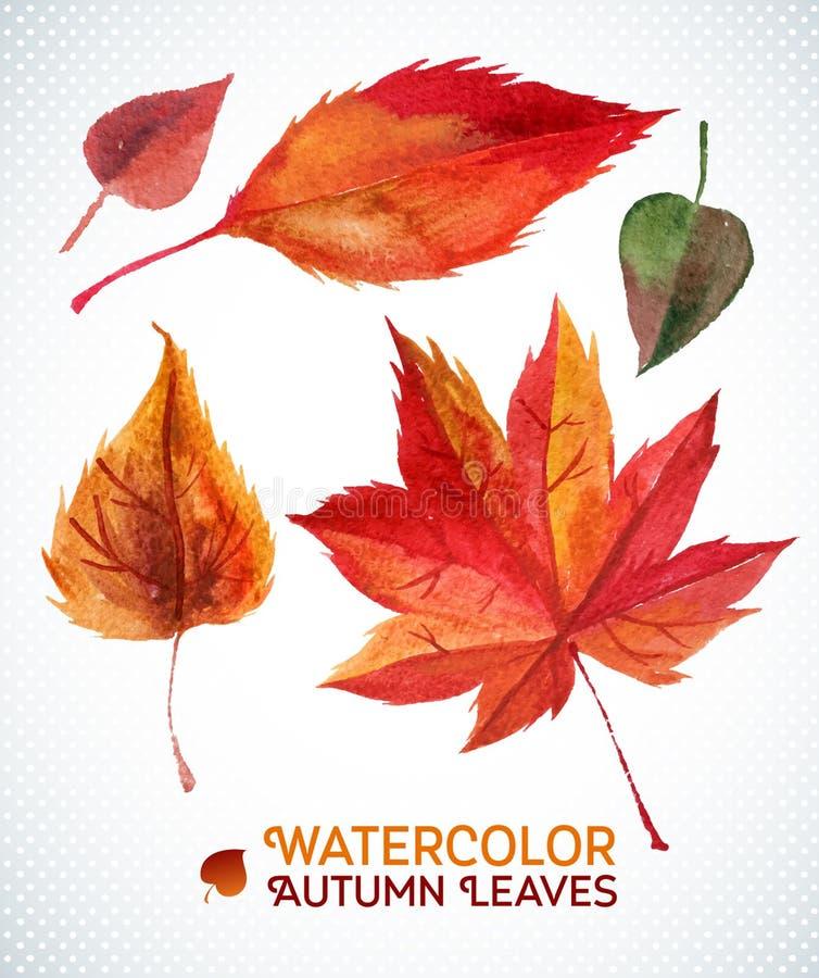 Ensemble de feuille d'automne d'aquarelle Collection d'illustration de vecteur de feuilles tirées par la main d'aquarelle