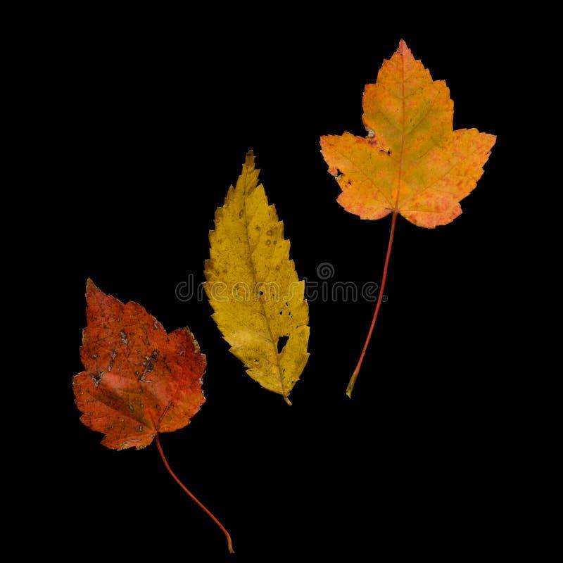 Ensemble de feuilles d'automne images stock