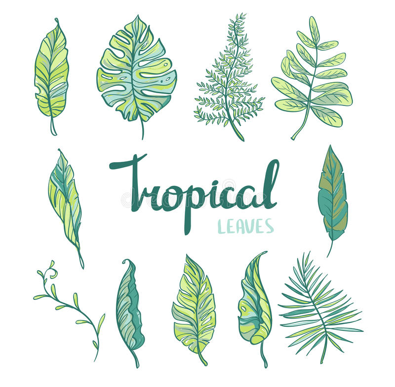 Ensemble de feuilles tropicales d'isolement sur le fond blanc illustration stock