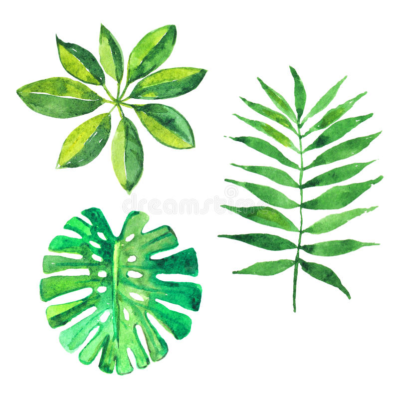 Ensemble de feuilles tropicales, illustration d'aquarelle illustration libre de droits