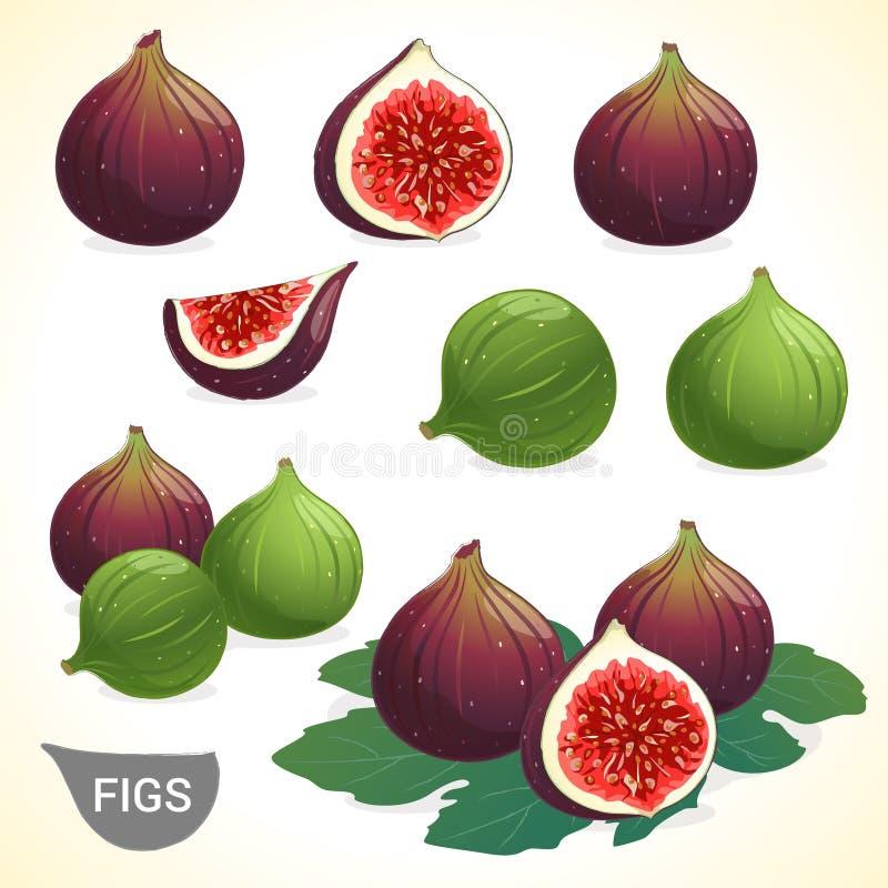 Ensemble de figues foncées de figue et de vert dans divers styles illustration de vecteur