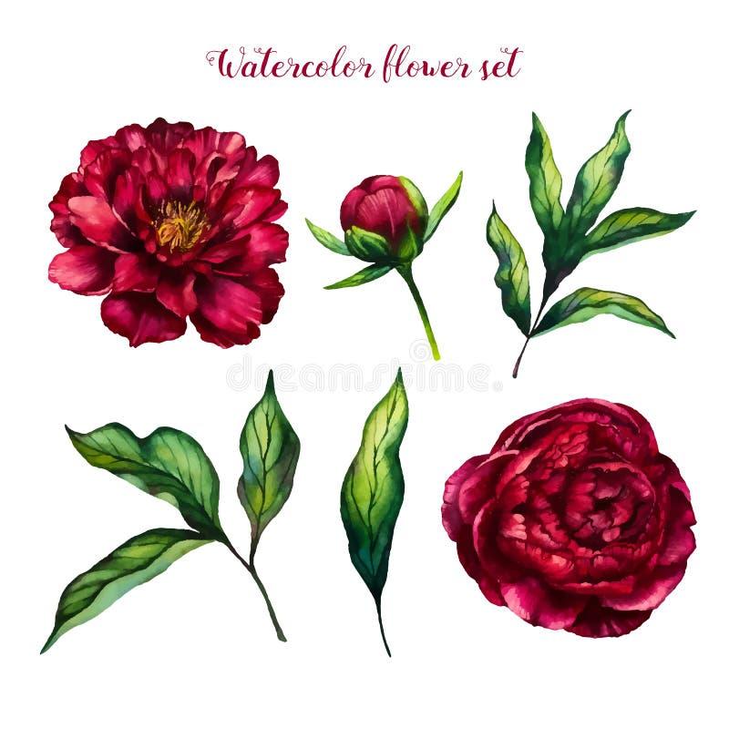 Ensemble de fleur d'aquarelle de pivoines et de feuilles images stock