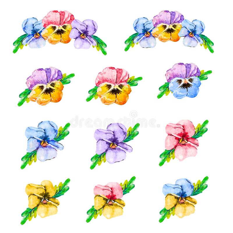 Ensemble de fleur d'aquarelle, illustration tirée par la main des pensées, éléments floraux colorés d'isolement sur le fond blanc illustration stock