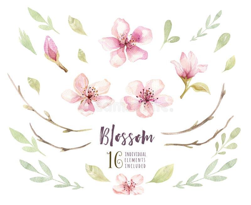 Ensemble de fleur de fleur de boho d'aquarelle Décoration de ressort ou d'été illustration libre de droits