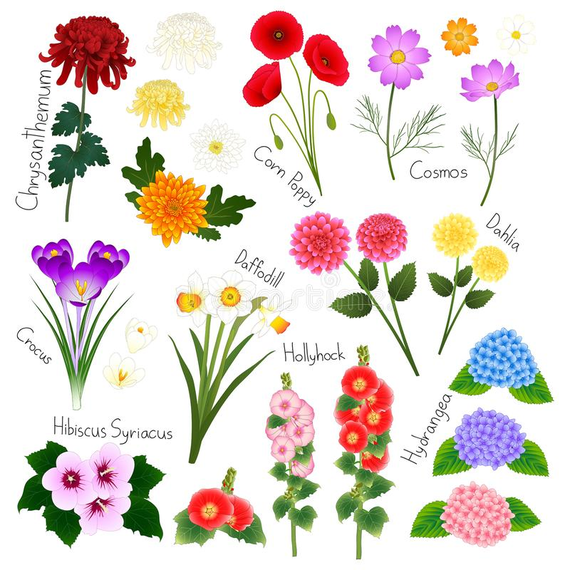 Ensemble 2 de fleur Flora Vector Collection photographie stock