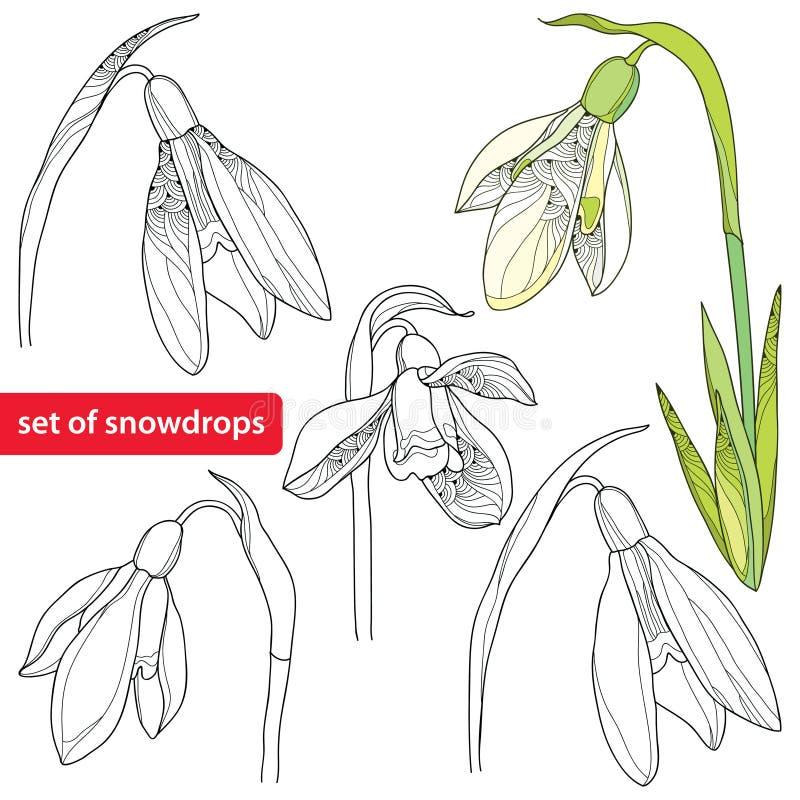 Ensemble de fleur ou de Galanthus de perce-neige sur le fond blanc illustration de vecteur