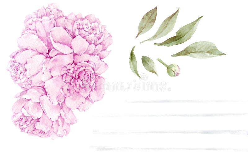 Ensemble de fleur de pivoine d'aquarelle d'isolement sur le fond blanc photographie stock libre de droits