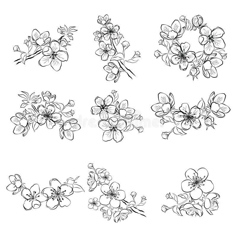 Ensemble De Fleurs De Cerisier Collection De Fleurs De
