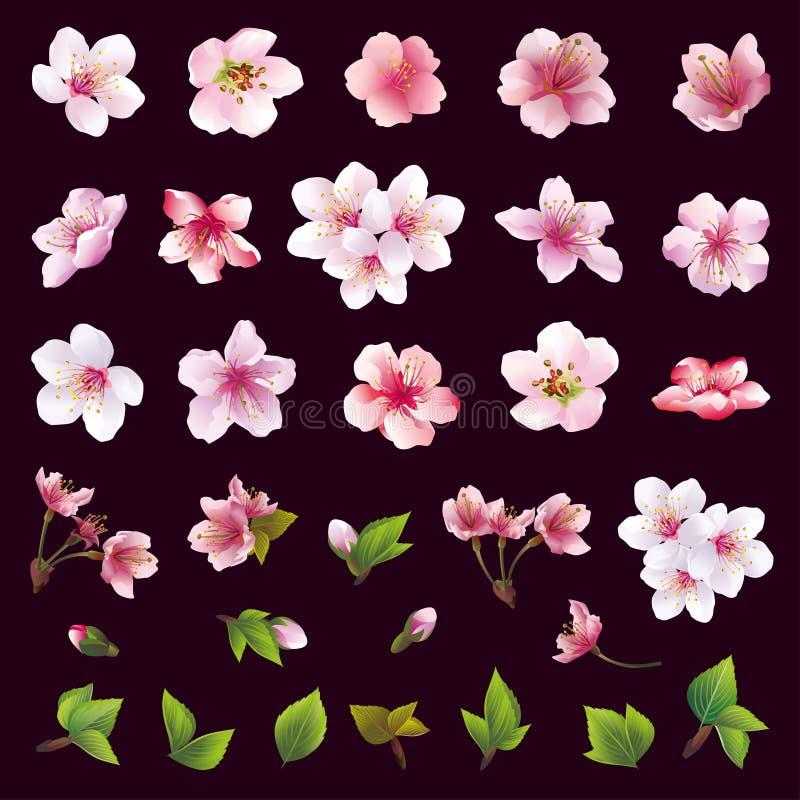 Ensemble de fleurs de cerisier et de feuilles illustration stock