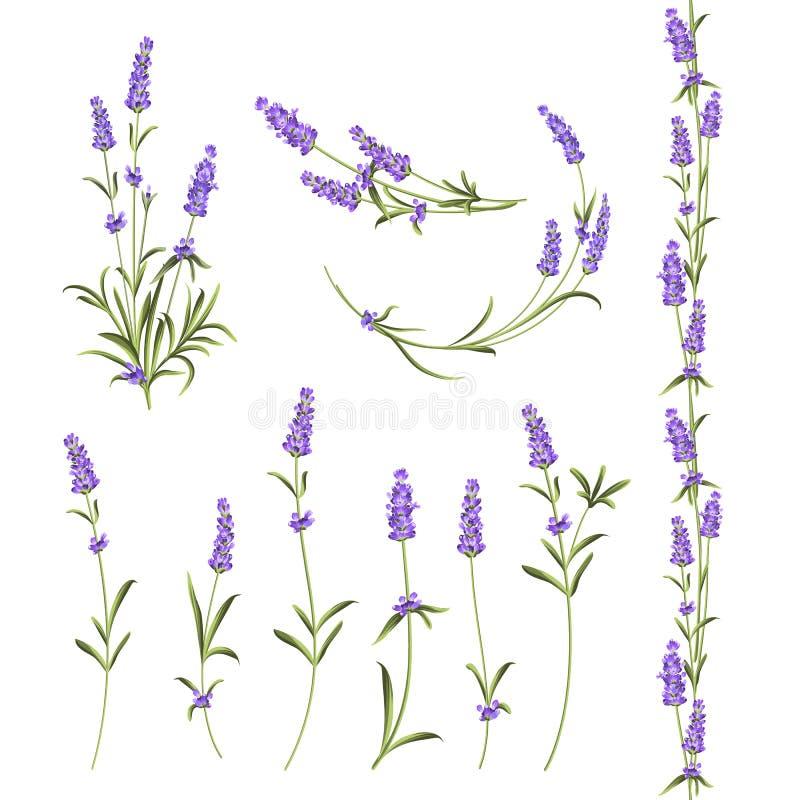Ensemble de fleurs de lavande illustration de vecteur
