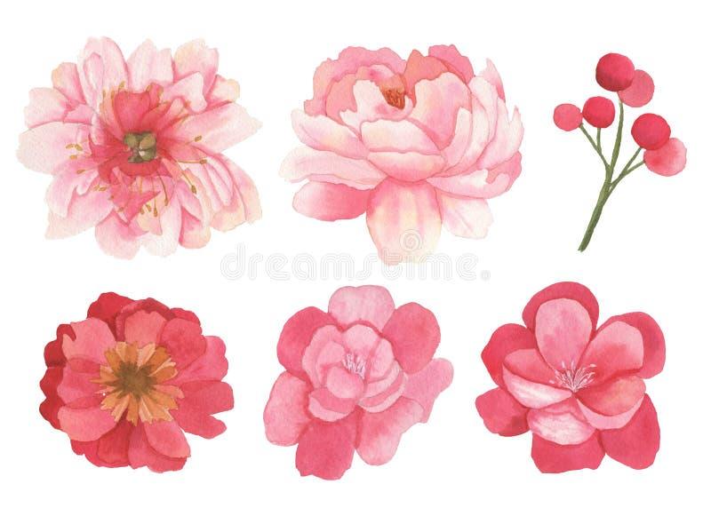 Ensemble de fleurs, de feuilles et d'éléments de branches illustration libre de droits