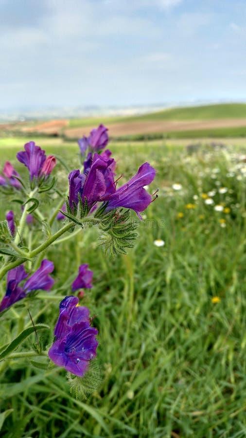 Ensemble de fleurs pourpres, au printemps image stock