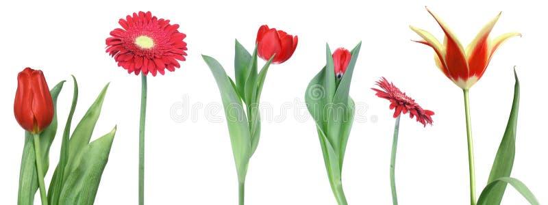 Ensemble de fleurs rouges image libre de droits