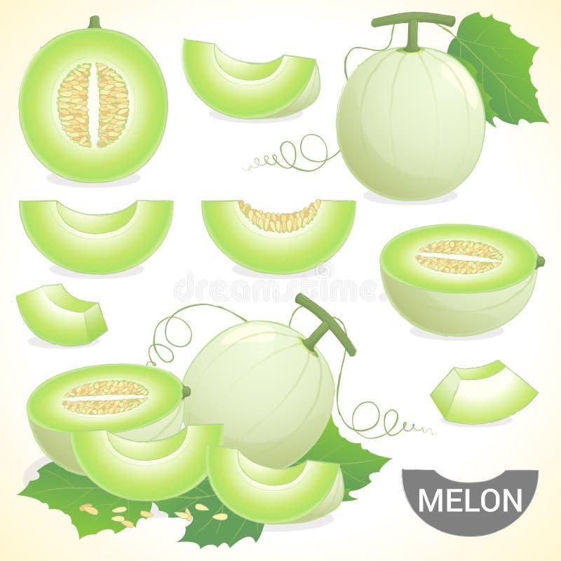 Ensemble de fruit de melon de miel de miellée de cantaloup illustration de vecteur