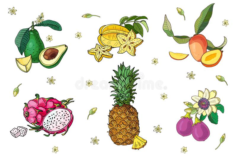 Ensemble de fruits exotiques Avocat, carambolier, mangue, pitahaya, ananas, passiflore comestible de passiflore Image d'isolement illustration libre de droits