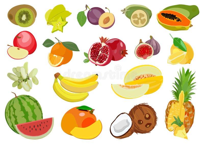 Ensemble de fruits exotiques et tropicaux mûrs multicolores Illustration de vecteur illustration stock