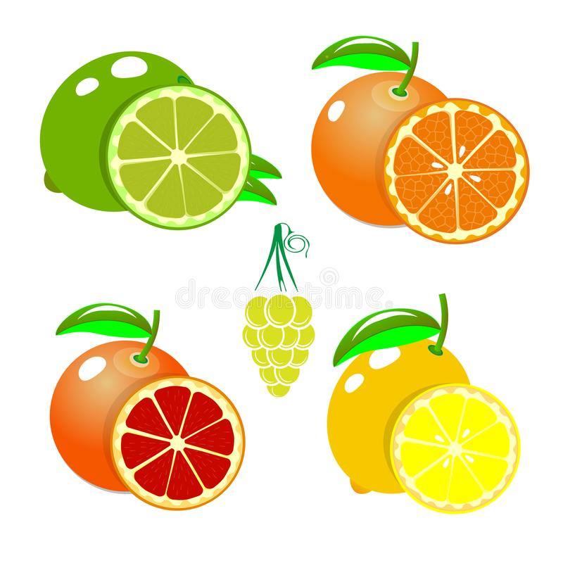 Ensemble de fruits orange, citron, chaux, pamplemousse, La bande dessinée porte des fruits collection de clipart Graphismes d'iso illustration stock