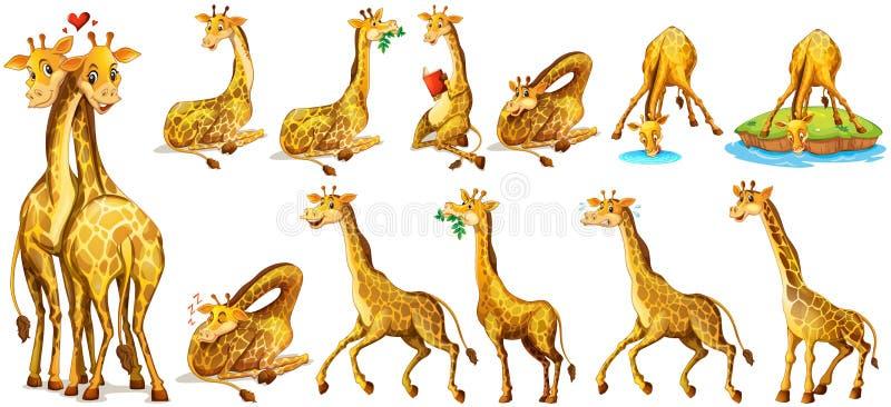 Ensemble de girafe dans différentes actions illustration libre de droits