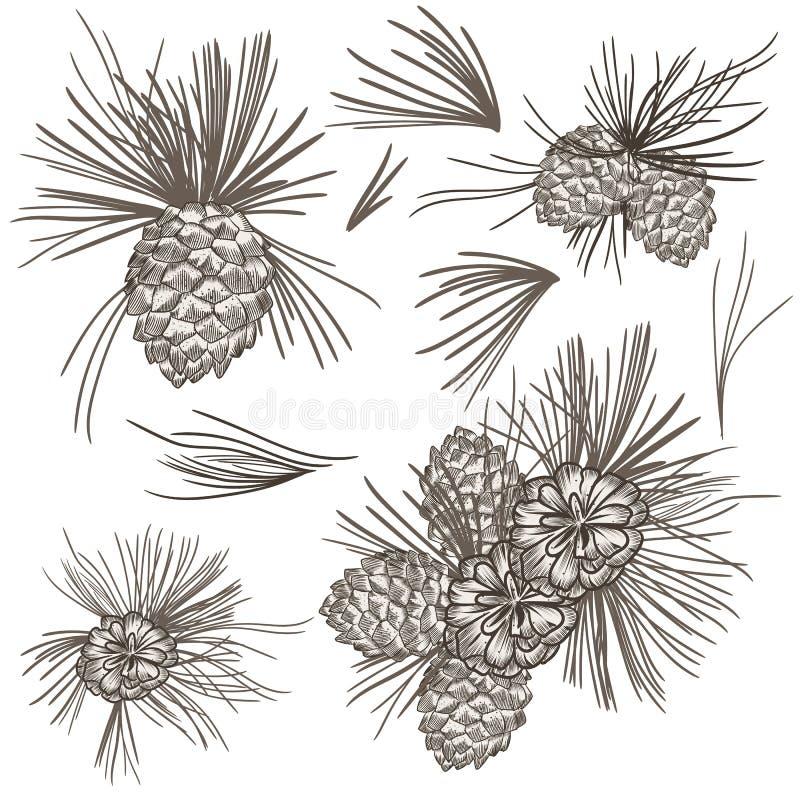 Ensemble de grains réalistes d'arbre de fourrure de vecteur pour la conception de Chirstmas illustration libre de droits