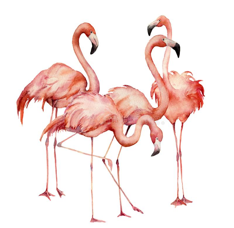 Ensemble de groupe de flamant d'aquarelle Oiseaux exotiques lumineux peints à la main d'isolement sur le fond blanc Illustration  illustration libre de droits