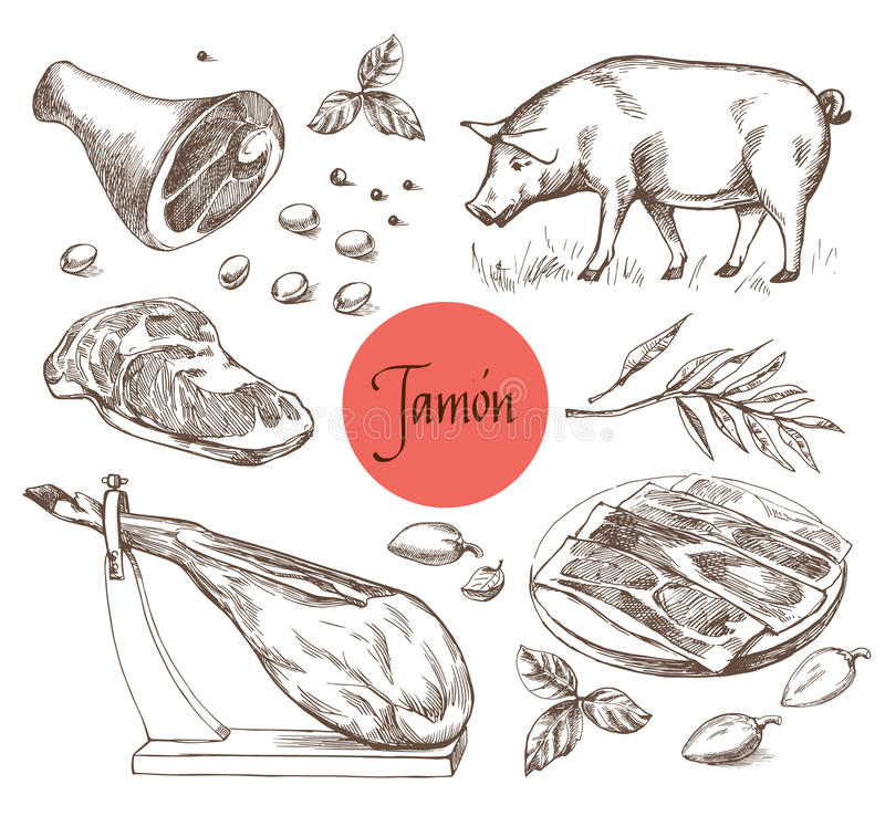 Ensemble de Jamon Porc ibérien noir, Jamon, viande, boeuf, épices pour la viande Illustration de vecteur dans le style de gravure illustration de vecteur