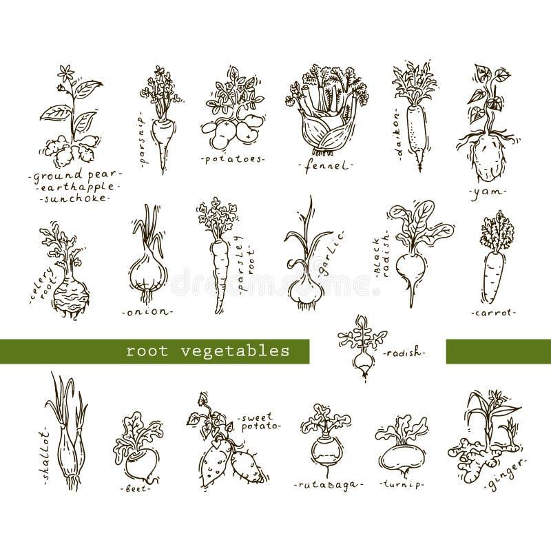 Ensemble de légumes à racine illustration stock