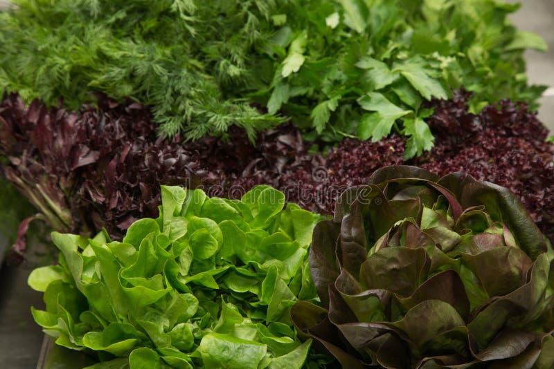 Ensemble de légumes frais et d'herbes Foyer sélectif Département peu profond image libre de droits