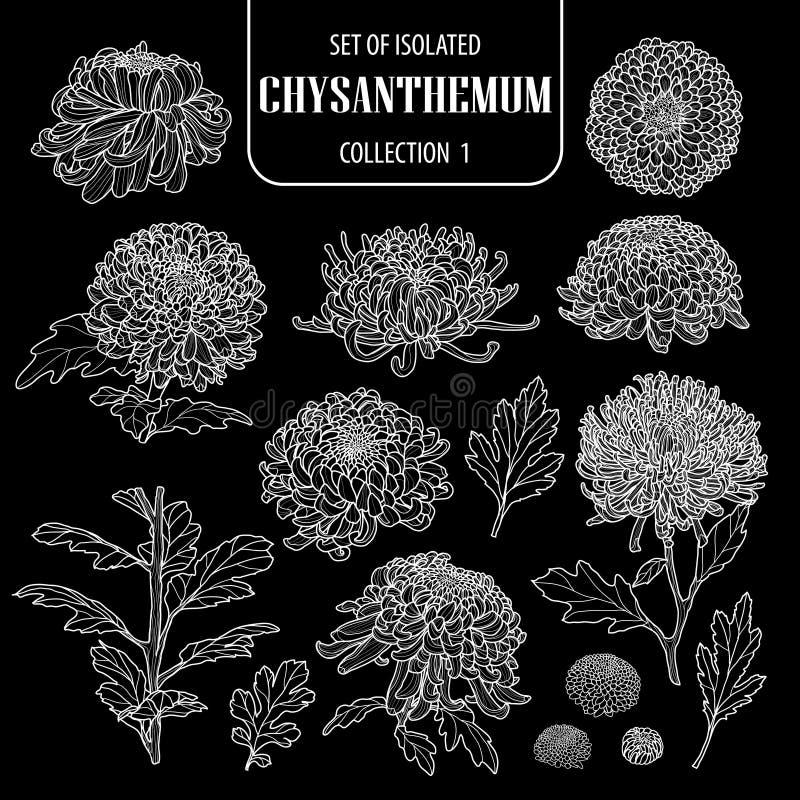 Ensemble de la collection d'isolement 1 de chrysanthème Contour blanc tiré par la main mignon d'illustration de vecteur de fleur  illustration libre de droits