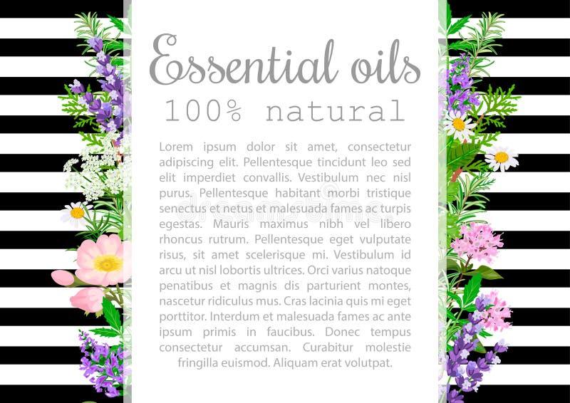 Ensemble de label populaire de plantes d'huile essentielle Insigne avec le texte illustration libre de droits