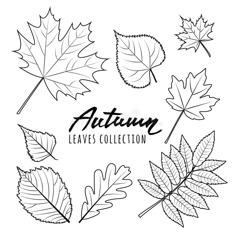 Ensemble de lames d'automne Feuilles tirées par la main de chute d'ensemble noir et blanc illustration stock