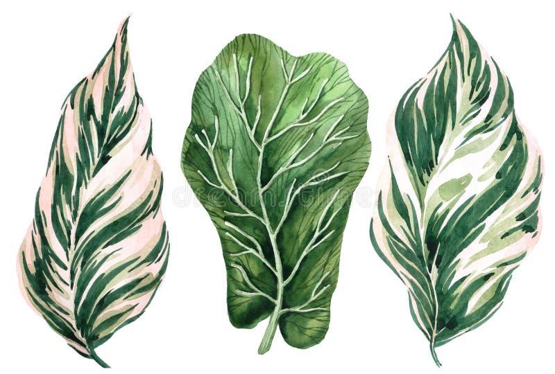 Ensemble de lames tropicales Jungle, illustrations botaniques d'aquarelle, éléments floraux, fougère et d'autres illustration stock