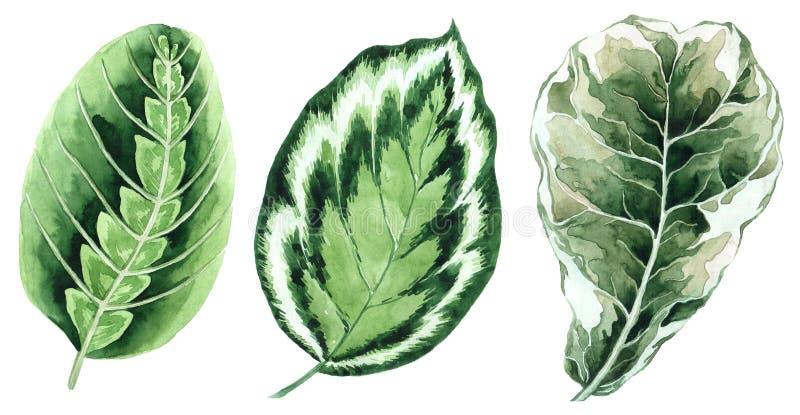 Ensemble de lames tropicales Jungle, illustrations botaniques d'aquarelle, ?l?ments floraux, palmettes, foug?re et d'autres Tir?  illustration de vecteur