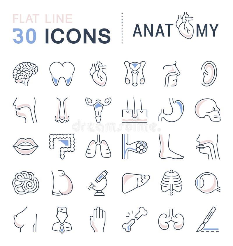 Ensemble de ligne icônes de l'anatomie et de la physiologie illustration de vecteur