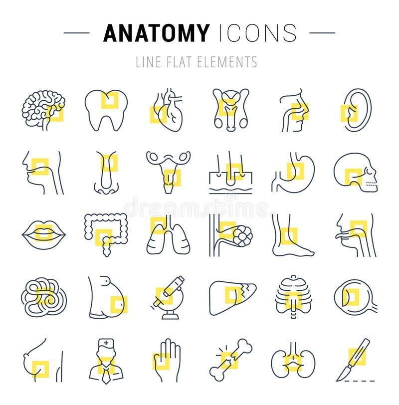 Ensemble de ligne icônes de l'anatomie et de la physiologie illustration libre de droits