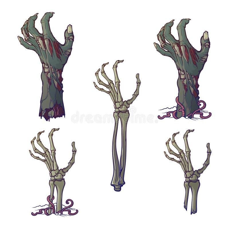 Ensemble de mains représentées réalistes de zombi de décomposition et augmentation squelettique de mains illustration libre de droits