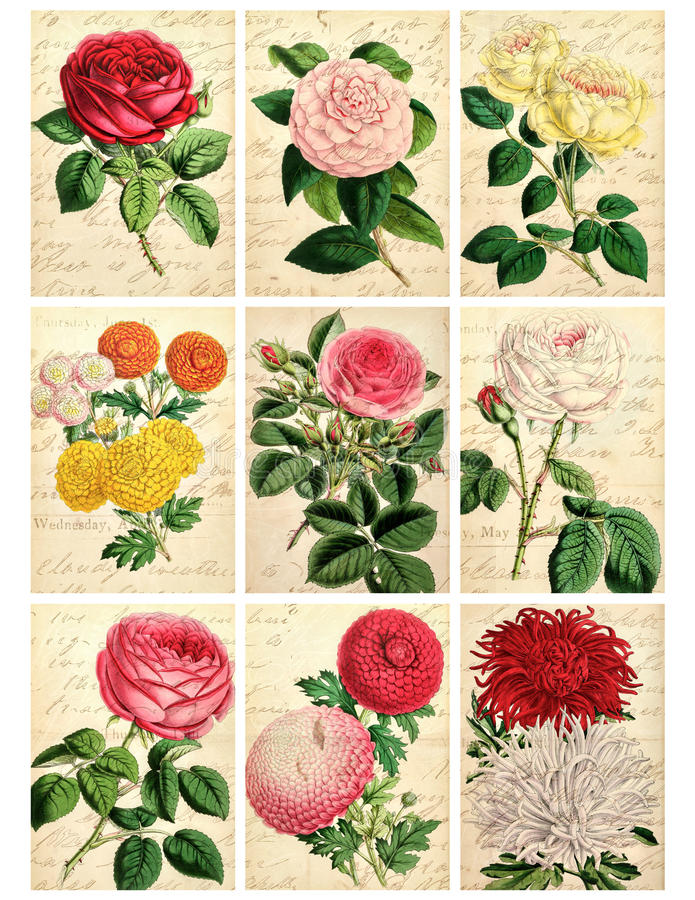 Ensemble de neuf cartes florales de cru minable illustration de vecteur