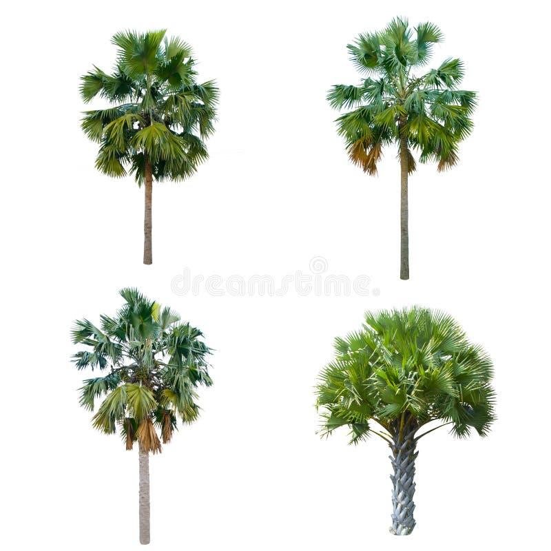 Ensemble de palmier d'isolement sur le fond blanc image stock