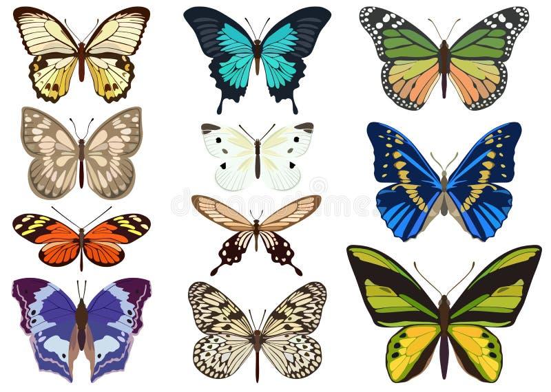 Ensemble de papillons colorés sur le fond blanc Illustration de vecteur illustration de vecteur
