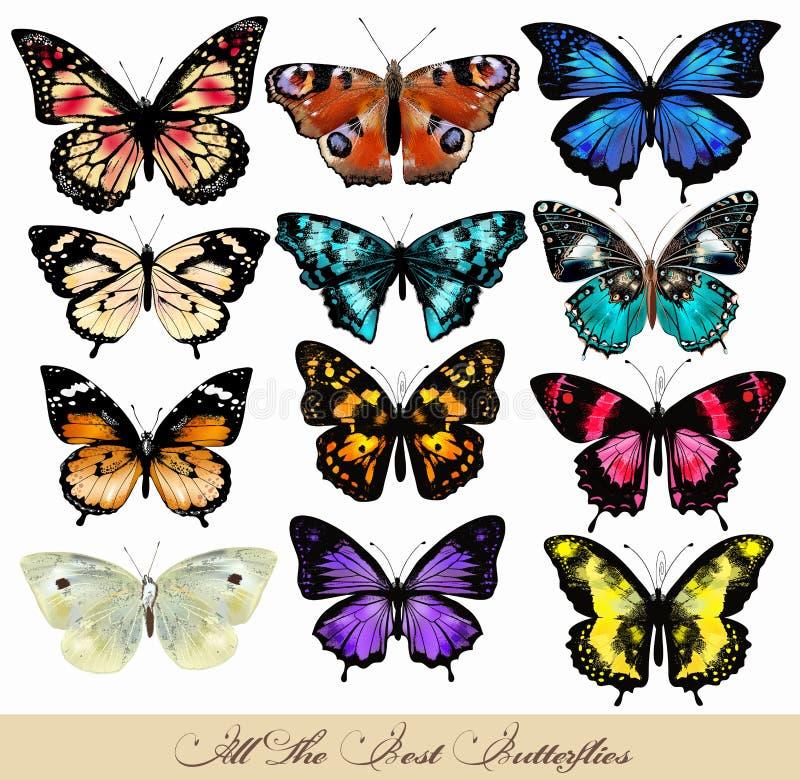 Ensemble de papillons réalistes de vecteur pour la conception illustration de vecteur