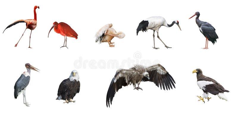Ensemble de 9 photographies des oiseaux images libres de droits