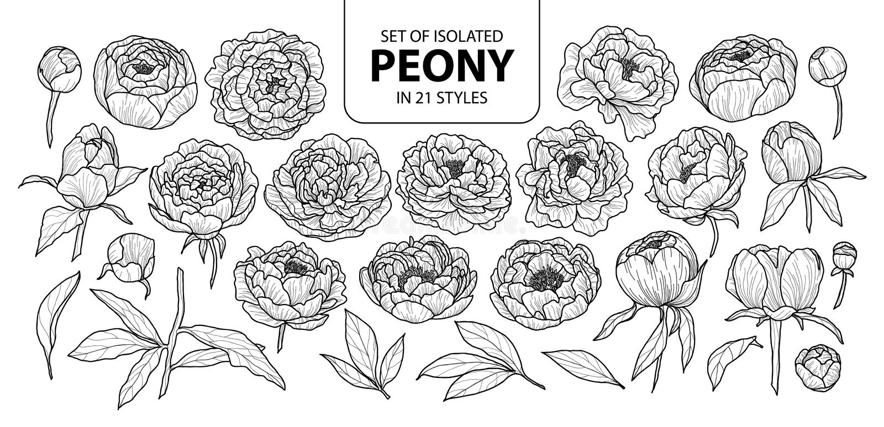 Ensemble de pivoine d'isolement dans 21 styles Illustration tirée par la main mignonne de vecteur de fleur dans l'avion d'ensembl illustration libre de droits