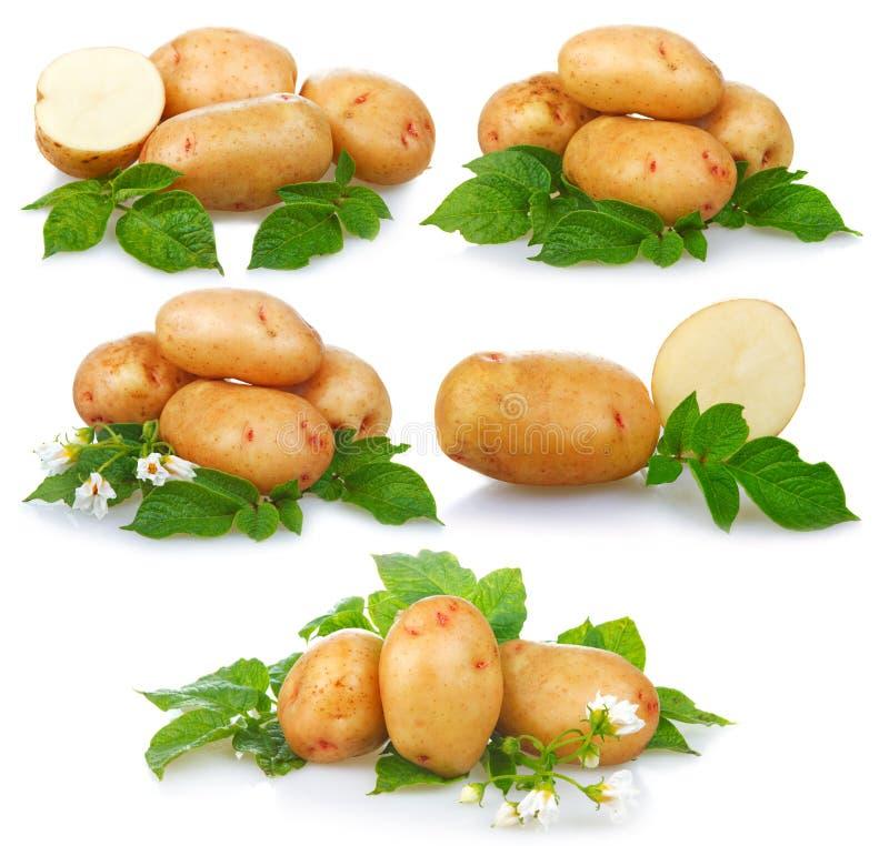 Ensemble de pommes de terre mûres végétales avec les feuilles vertes d'isolement image stock